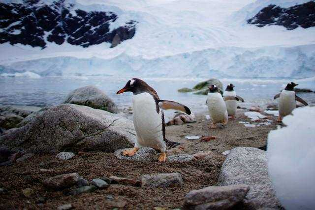 Journey to Antarctica through amazing pictures of seals, penguins and glacial beauty