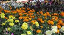 Assam: Feast your eyes on flowers at annual flower show