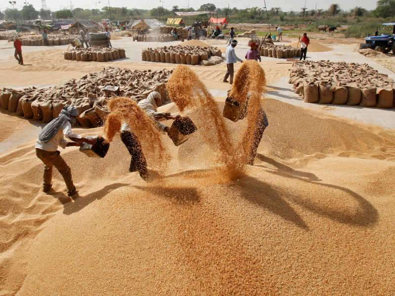 Wheat: Cabinet hikes wheat MSP by Rs 105 per quintal for